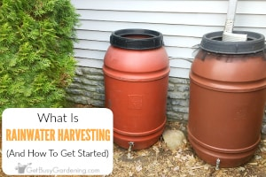 What Is Rainwater Harvesting? (And How To Get Started)
