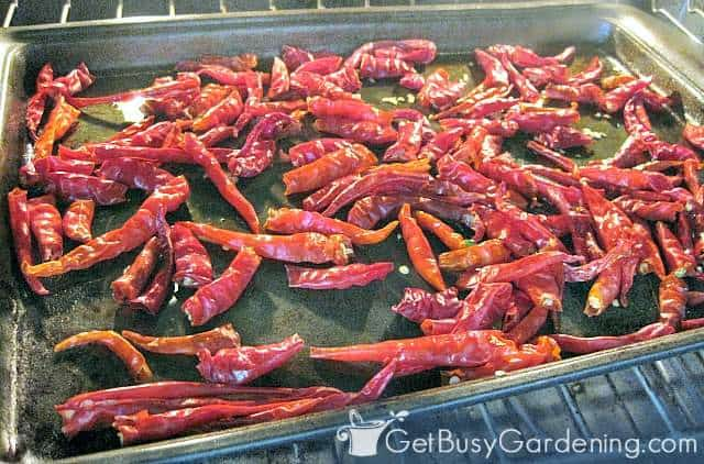 Drying cayenne peppers in the oven