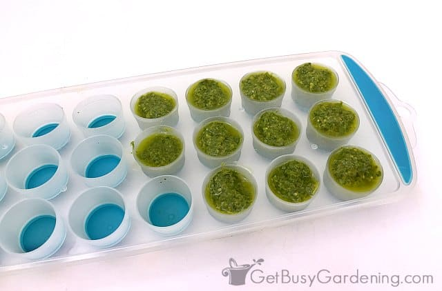 Freezing basil pesto in ice cube trays