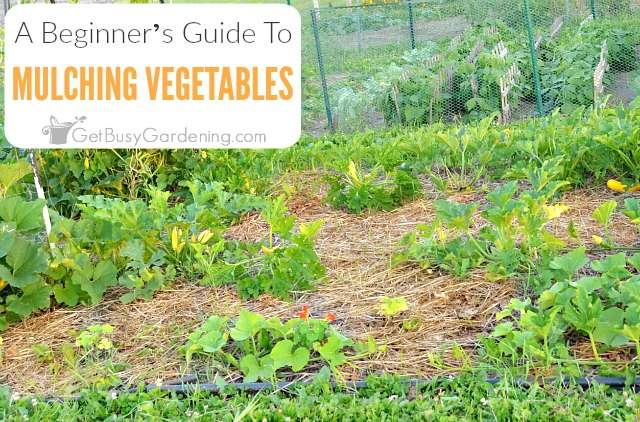 Beginner's Guide To Mulching A Vegetable Garden