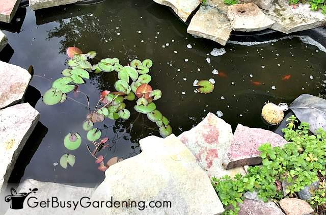 My small fish pond after cleaning