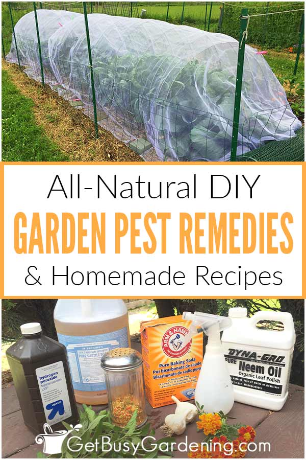 All-Natural DIY Garden Pest Rememdies & Homemade Recipes