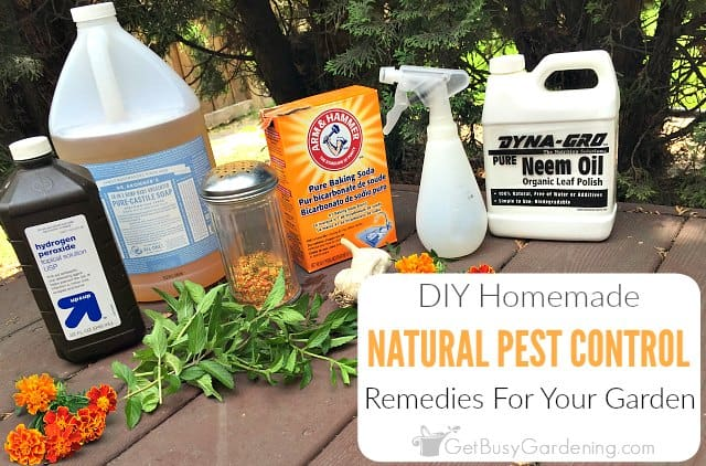 Natural Pest Control Remedies And Recipes For The Garden