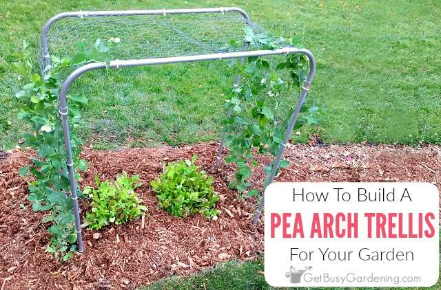 How To Build A Pea Trellis Arch