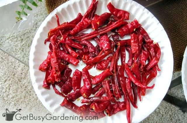 Preparing cayenne peppers for making crushed red pepper