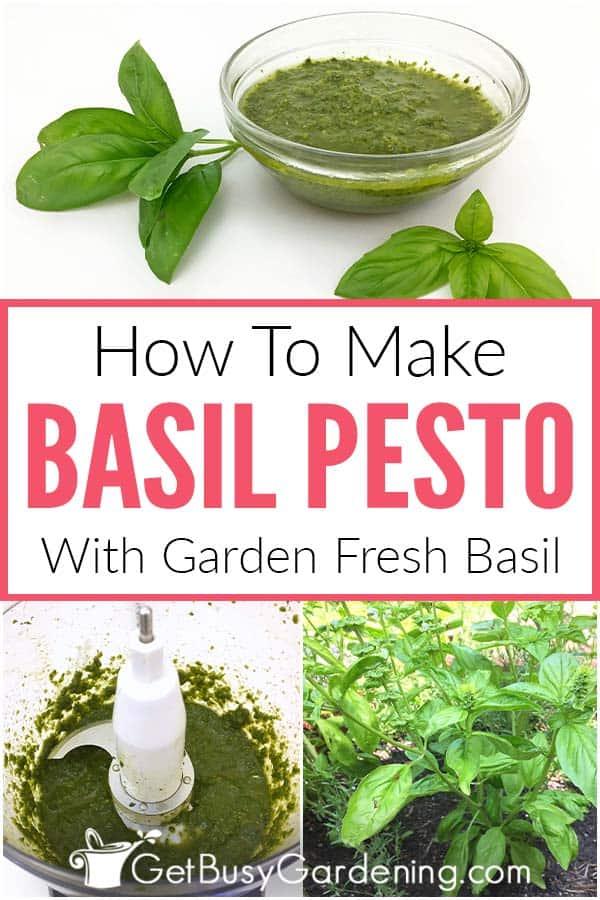 How To Make Basil Pesto With Garden Fresh Basil