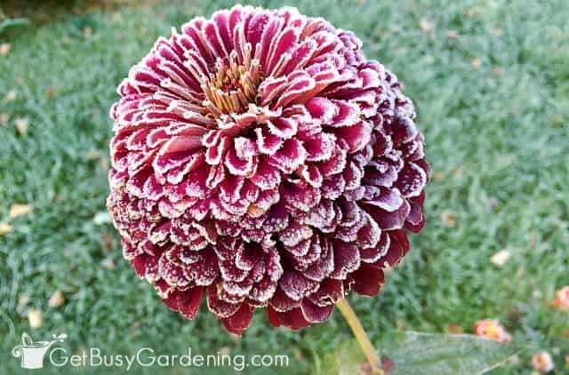 Begin winterizing the garden after the first hard freeze
