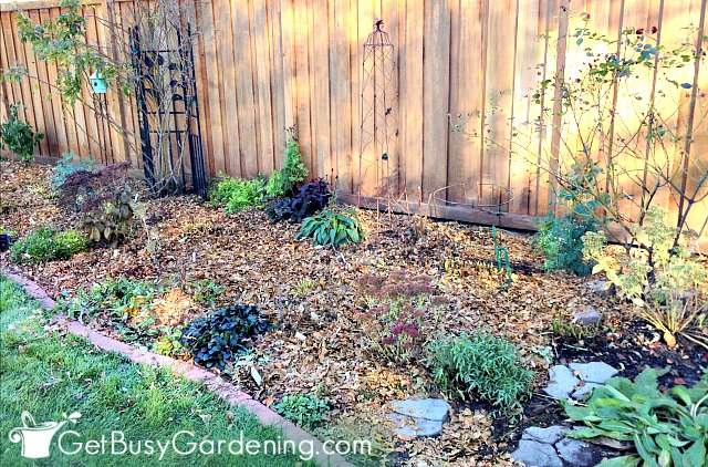 Getting perennials ready for winter