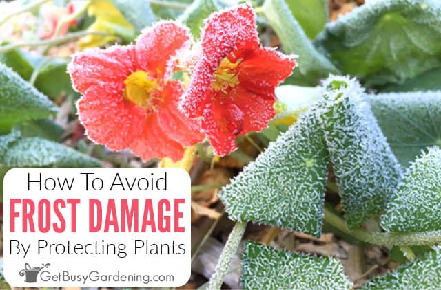How To Protect Plants From Frost Damage