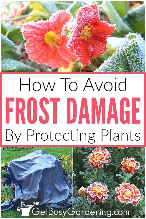 How To Avoid Frost Damage By Protecting Plants