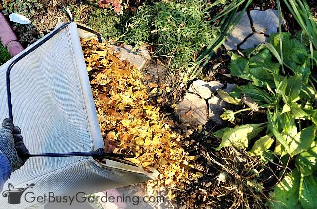 Putting leaves on flower beds in fall