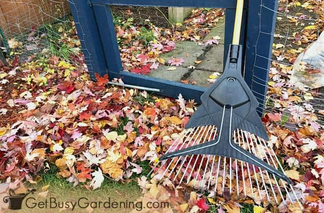 Raking is an important fall lawn care task