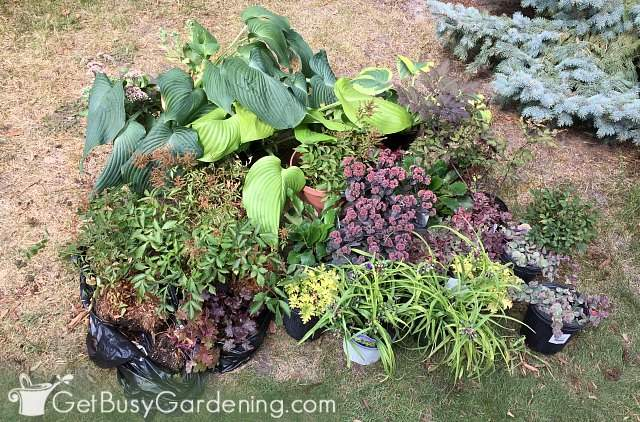 Perennial plants for the front of my house