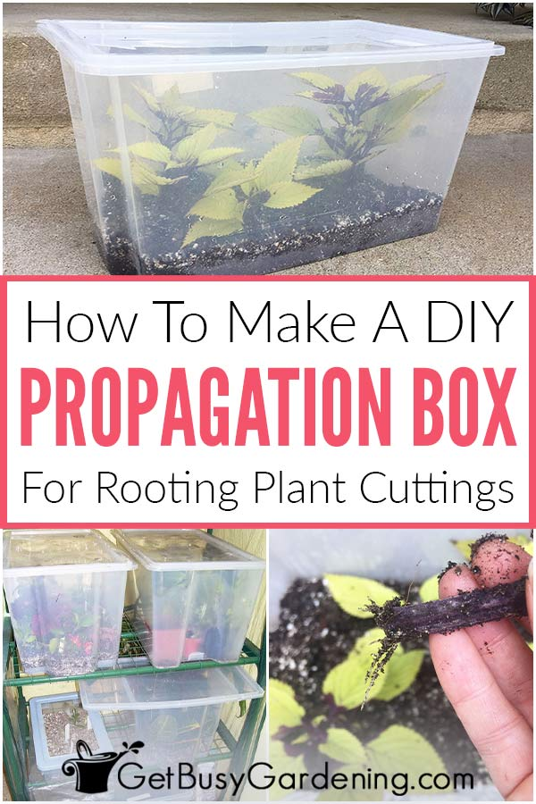 How To Make A DIY Propagation Box For Rooting Plant Cuttings