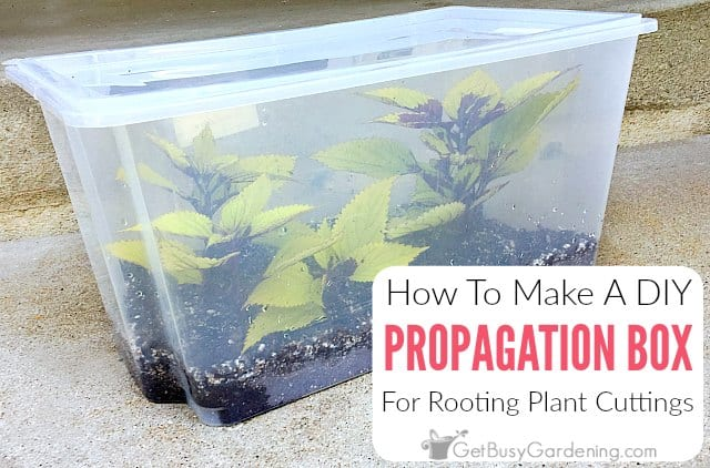 A Cheap And Easy Propagation Box For Rooting Cuttings