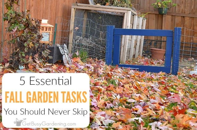 5 Essential Fall Garden Tasks You Should Never Skip