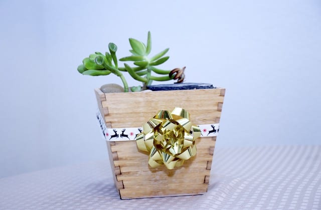 Wrapping succulents as Christmas gifts