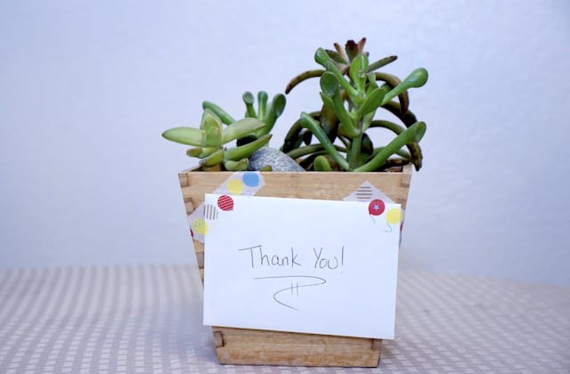 Giving plants as a Thank You gift