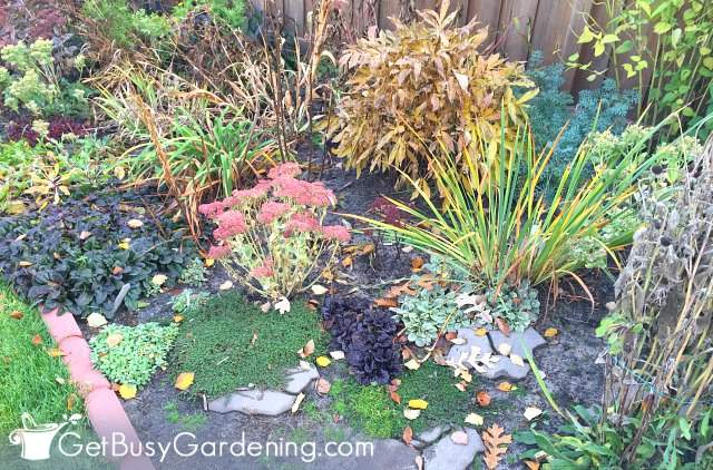 My garden before fall cleanup