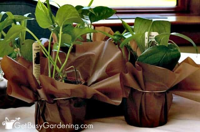Houseplants are good plants to give as gifts