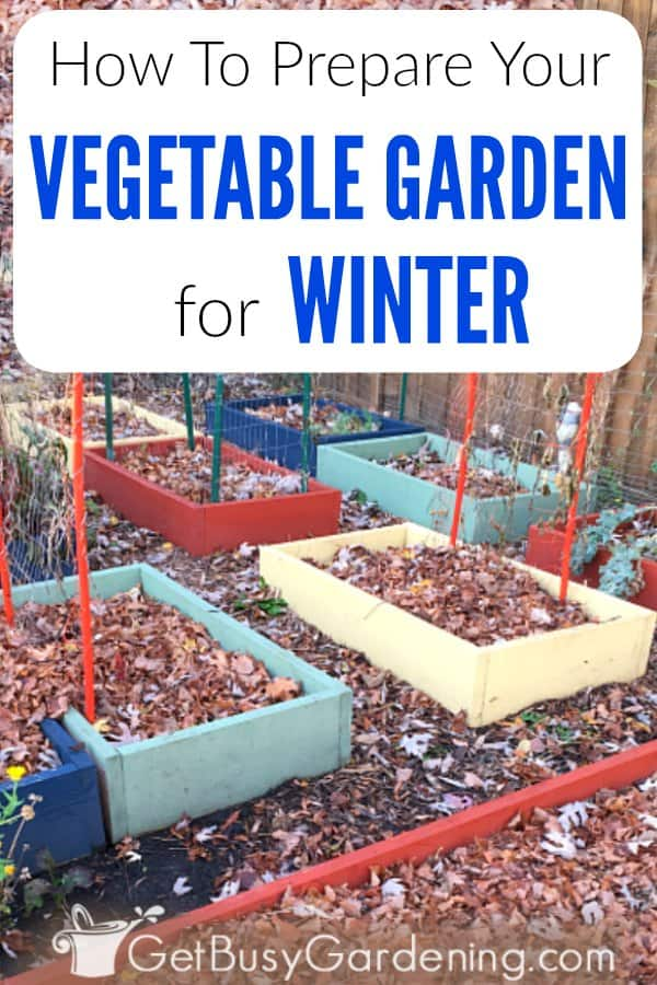 If you're not sure how to winterize your vegetable garden, I've got you covered. Follow these step by step instructions for preparing vegetable garden beds before the snow flies; including removing plants, preparing the soil, and covering it with leaves or winter mulch. You'll find tons DIY tips and ideas to help you prep your garden for winter, so it's ready to grow vegetables next spring.