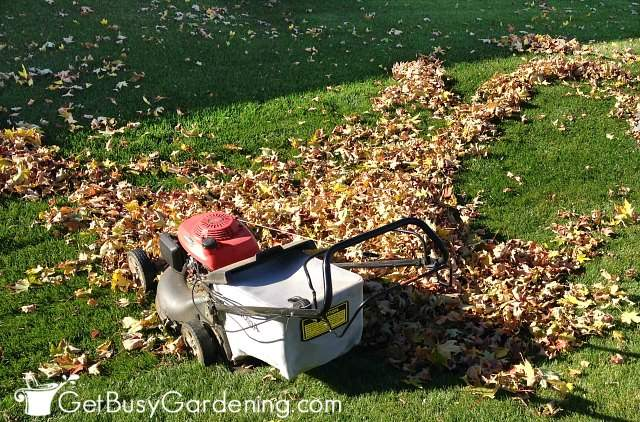 Using my lawn mower to simplify fall leaf cleanup