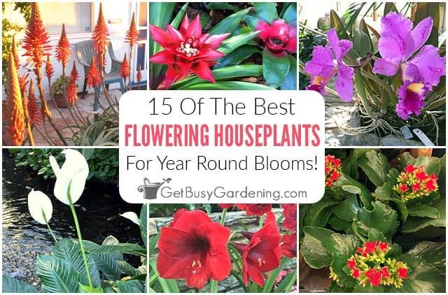 15 Best Flowering Houseplants To Grow Indoors