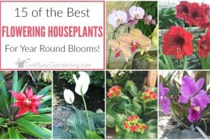 15 Of The Best Flowering Houseplants