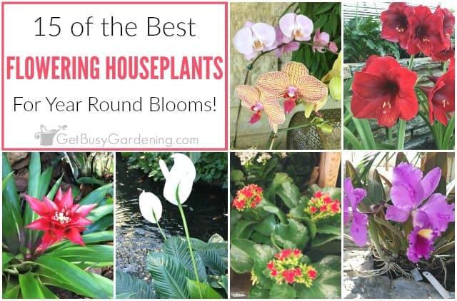 15 Of The Best Flowering Houseplants Get Busy Gardening