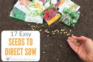 17 Easiest Seeds To Direct Sow