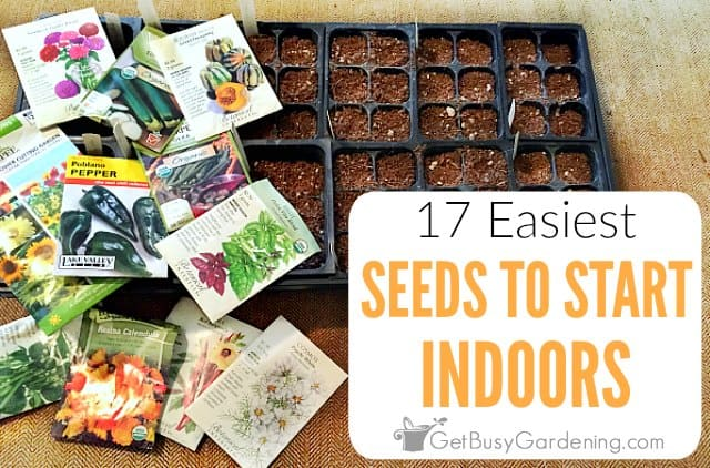 17 Easiest Seeds To Start Indoors