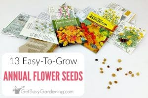 13 Easy Annual Flowers To Grow From Seed