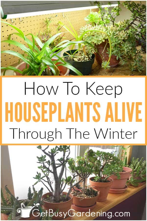 How To Keep Houseplants Alive Through The Winter