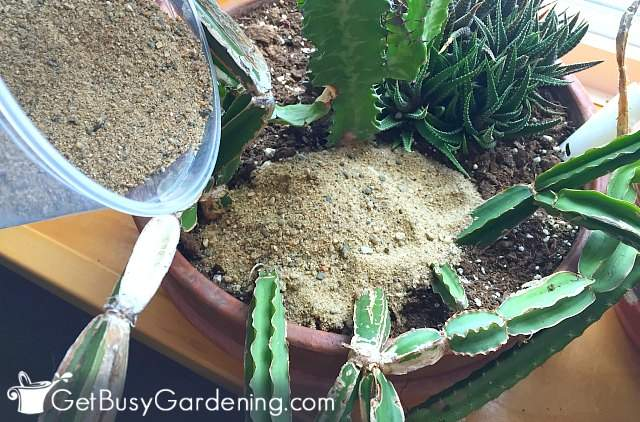 How To Get Rid Of Bugs On Houseplants - Get Busy Gardening Natty Flies In House Plants on