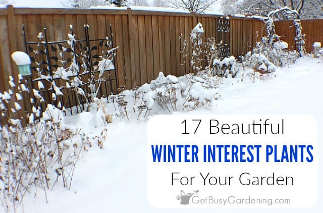 17 Winter Interest Plants For Your Garden