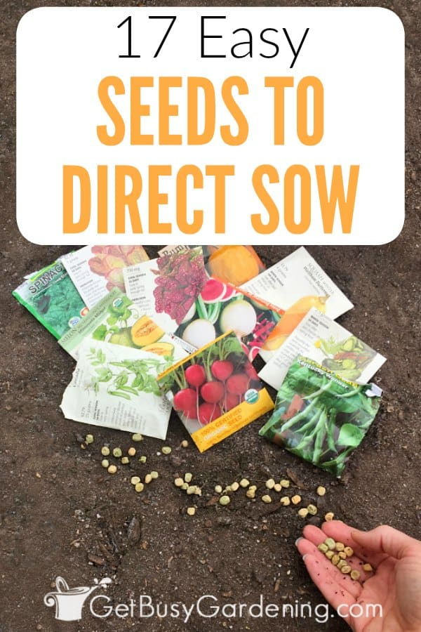 Did you know that some seeds are much easier to grow outdoors than they are to start indoors? There are tons of different types of seeds that you can plant directly in the garden. If you're a new gardener, it's best to start with easy seeds to direct sow. Then once you gain some confidence, you can move on to growing other types of seeds too. Check out my list of the easiest seeds to direct sow (vegetables, herbs and flowers).