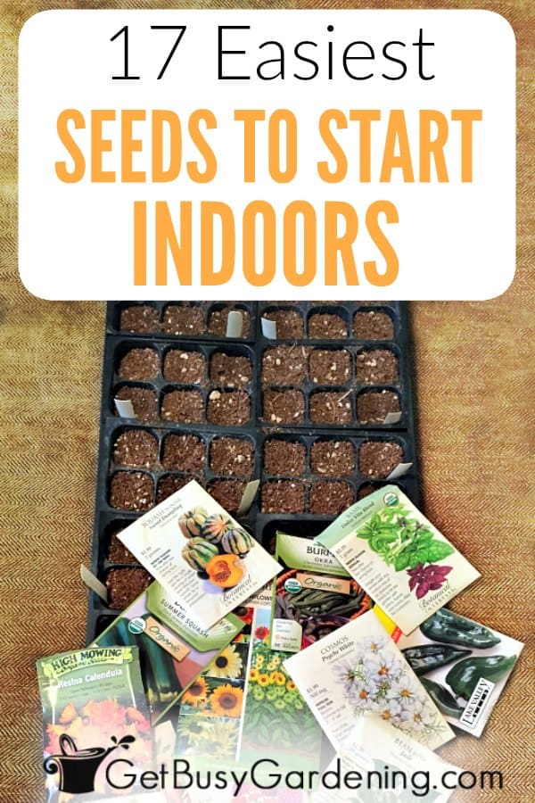 It's fun and rewarding to grow your own seeds for your garden! If you're new to growing seeds, it's best to begin with easy plants to grow indoors from seed. To help you be successful, check out this list of some of the easiest seeds to start indoors; both flowers and vegetables. Then, once you become a seed starting pro, you can move on to planting other more difficult seeds.