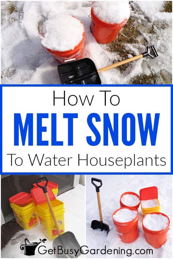 How To Melt Snow For Watering Houseplants