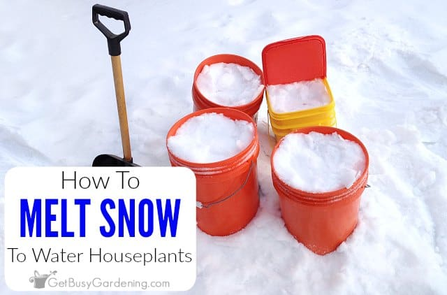 How To Melt Snow To Water Houseplants
