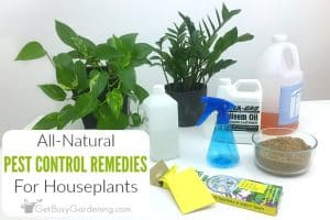 Natural Pest Control For Houseplants… Say NO To Toxic Pesticides!