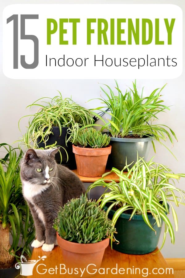 Houseplants and pets don't always get along, but some indoor plants can be downright dangerous for cats and dogs. The thought of having poisonous plants in the house without even realizing it is very scary (especially around my new baby kitty). But rest assured, there are plenty of indoor plants that are safe for cats and dogs if they do decide to take a bite. Avoid the risk by growing these non-toxic pet friendly houseplants.