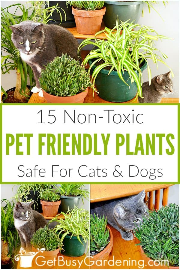 15 Non-Toxic Pet Friendly Plants Safe For Cats & Dogs