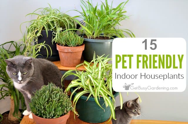 15 Pet Friendly Indoor House Plants