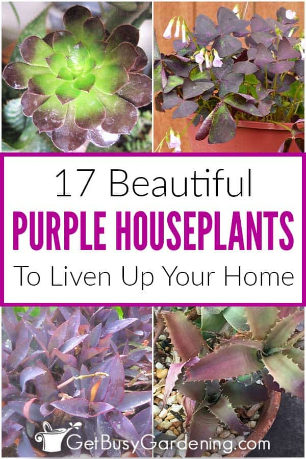 17 Beautiful Purple Houseplants To Liven Up Your Home