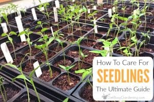 How To Care For Seedlings: The Ultimate Guide