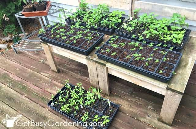 Transitioning seedlings from growing inside to outside