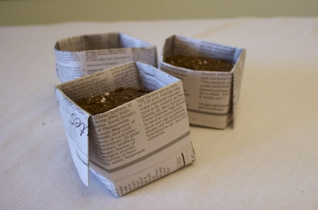 Square newspaper pots for seedlings