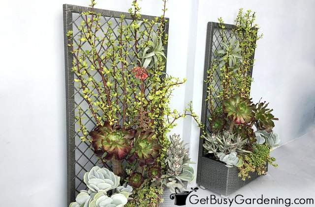 A planter box and trellis is a self contained vertical growing system