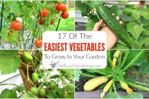 17 Easy Vegetables To Grow In Your Garden