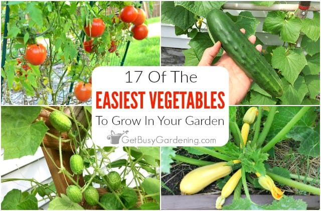 17 Easy Vegetables To Grow In Your Garden Get Busy Gardening